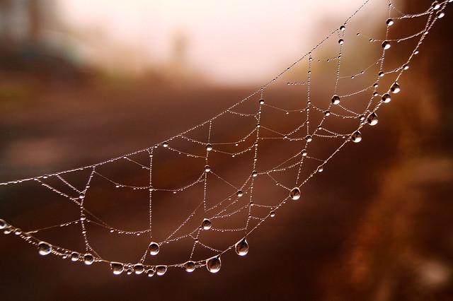 Autumnal Web, Sony SLT-A58, Sony DT 18-55mm F3.5-5.6 SAM II (SAL18552)