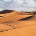 CEP23880-1The sahara