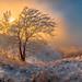Winter fog at sunset. by fedorlashkov