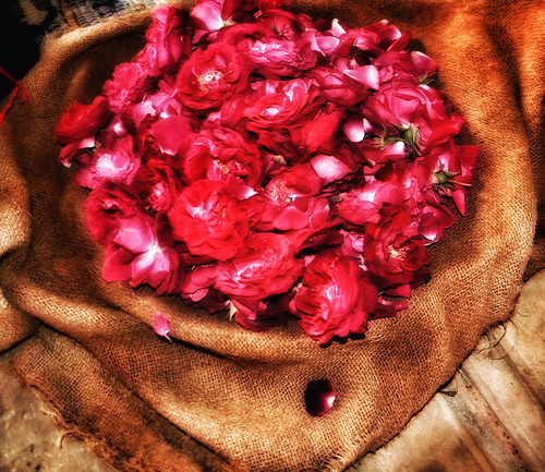 Burlap bag of rose to sprinkle on tombs in India