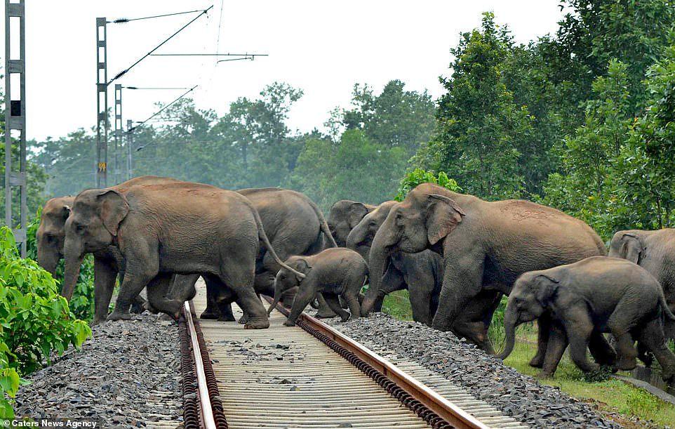Elefantes-huyendo