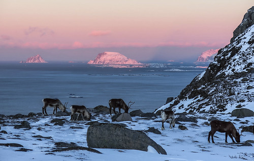 January in the Arctic. A chilly but relaxed tableau.