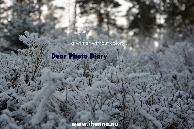 Dear Photo Diary, a winter without very much color 2018