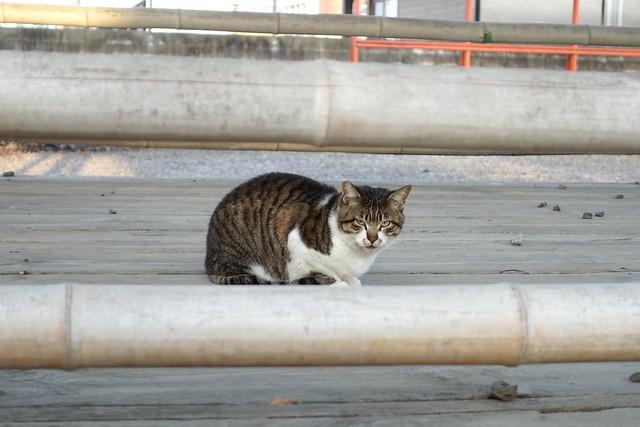 Today's Cat@2019-03-25