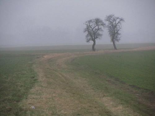 20110316 0203 351 Jakobus Nebel Weg Bäume Feld_K