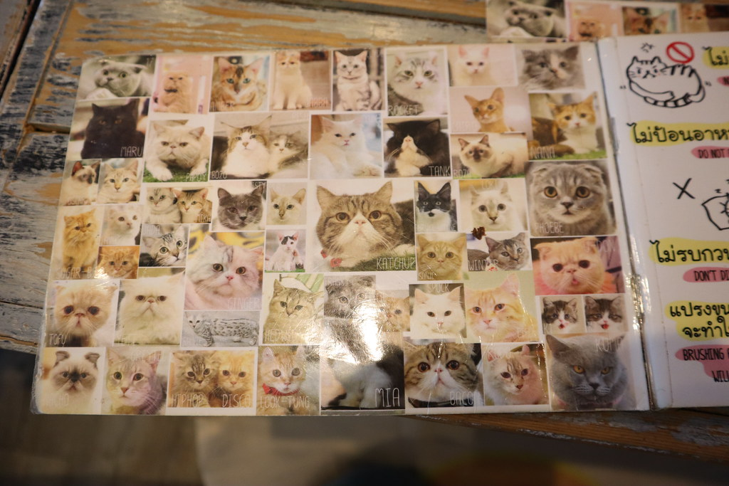Caturday cat cafe (8)