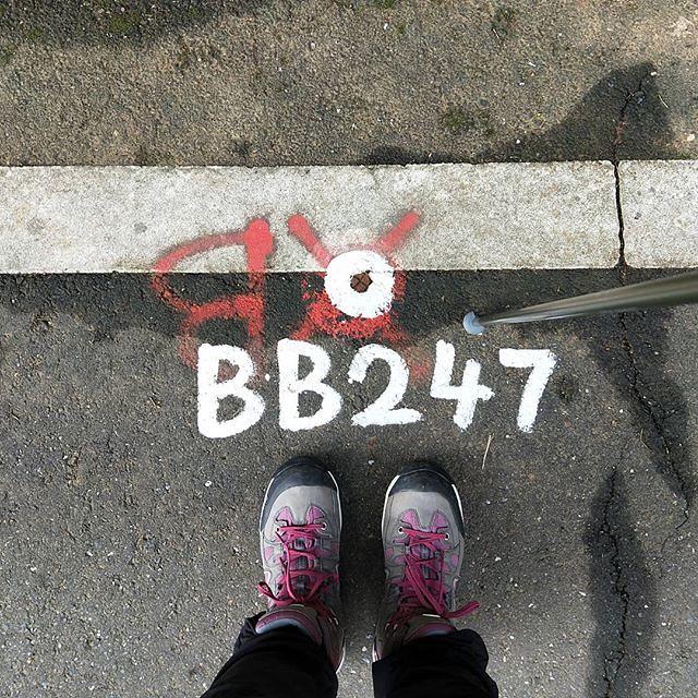 20190203 吼 你自己從實招來 BB 是誰? #只有我能247啊