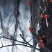 Vibrant Winter Berries