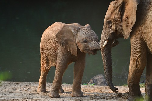 gentle Elephant Interaction