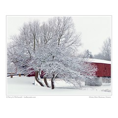 Winter, West Montrose, Ontario