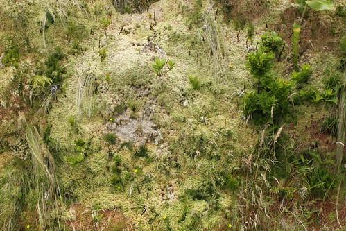 Pico vegetation density 2