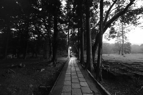 25-02-2019 Nara on morning (18)