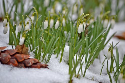 After snowfall. 11.04.2019