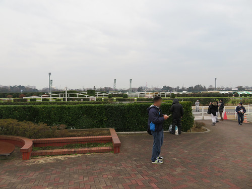 中山競馬場の7号大生垣の観戦スポット