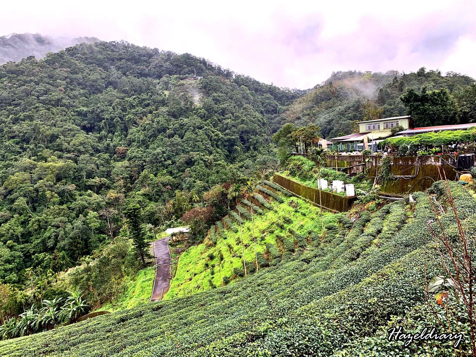 Ba Gua Tea Plantation