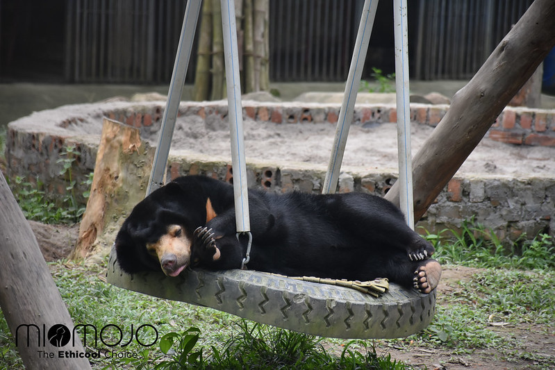 Layla sleeping on swing copy