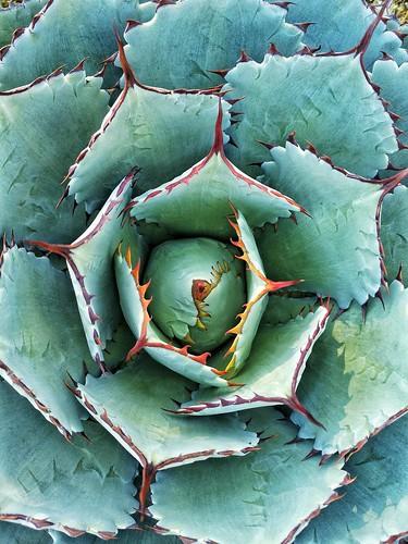 Perfección vegetal
