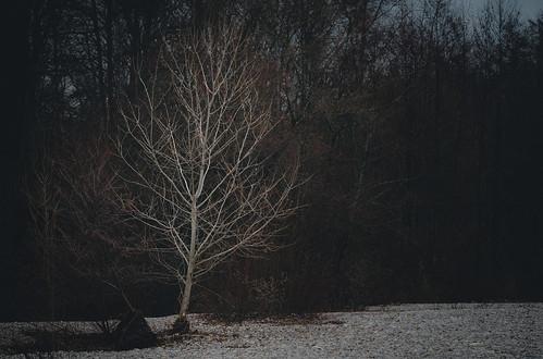 White tree last day