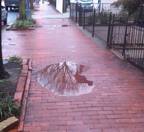 Puddle in Brick Sidewalk