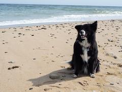 Nauset Light Beach - Juniper 2
