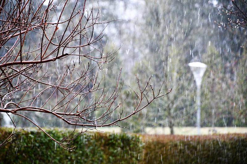 Snow in Garden 14.03 (1)