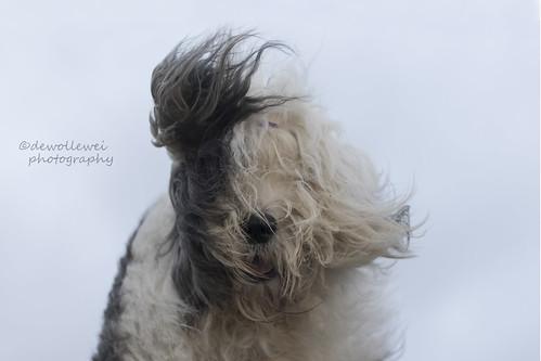 wind hoofd