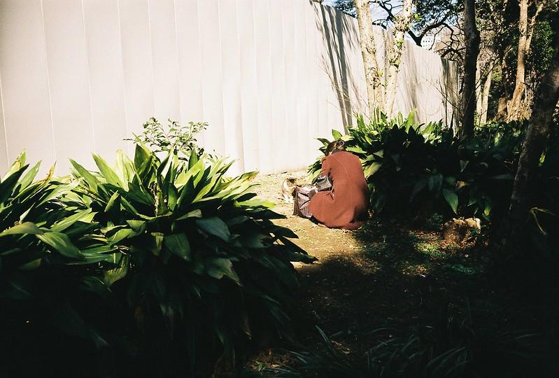 Leica M2+Leitz Summicron 35mm f2 0+Kodac Ultramax 400日比谷公園の猫