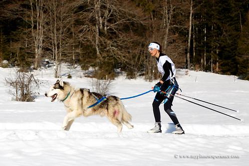 Ski Joëring race