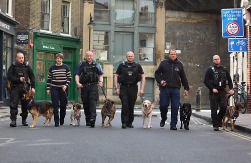 PDSA order of merit dogs