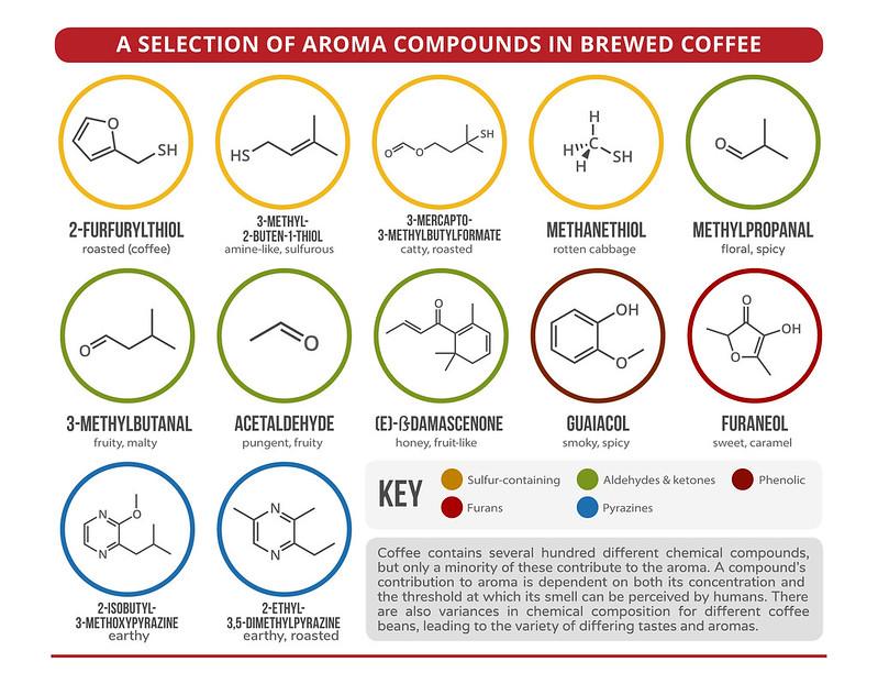 Khoa học cảm quan về mùi hương cà phê  PrimeCoffee