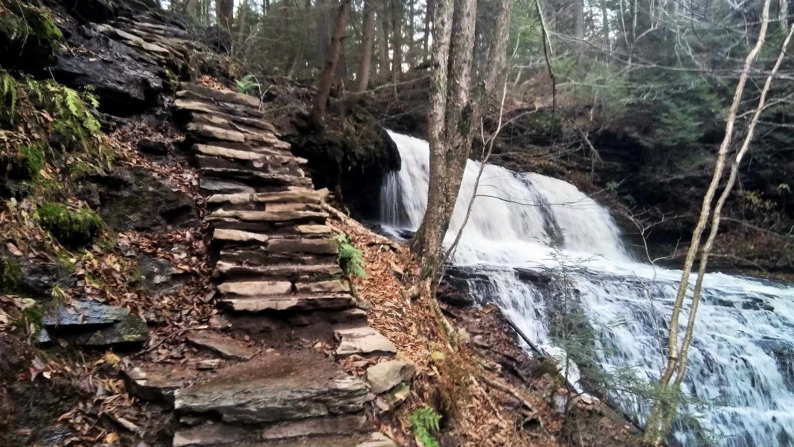 Steep steps at Ricketts Glen