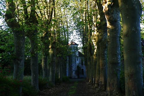 20090529 116 1108 Jakobus Bäume Allee Schloss