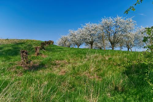 Spring Uphill