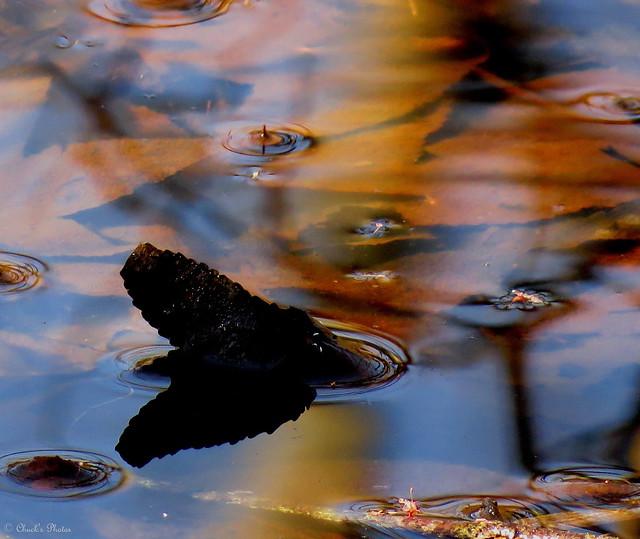 Slosn's Pond.