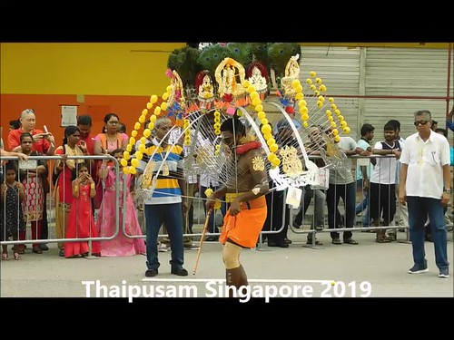 video: thaipusam - devotees performing while carry kavadis