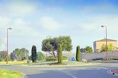 France, sur ce rond point avec les Iris en fleurs et olivier - Photo of Fleury