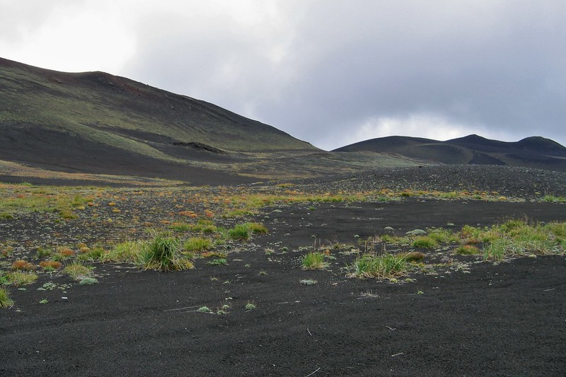 Высокогорная тундра на Толбачике, Камчатка