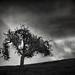 A Tree in November by StefanB
