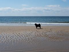 herring cove beach - juniper 2