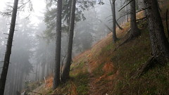 Hausleiter Nebel