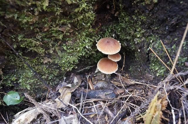 The last mushroom hunt this year