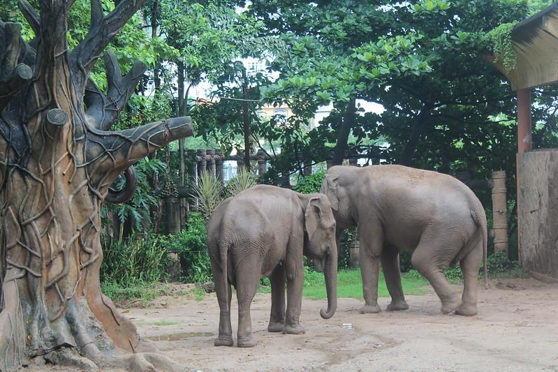 Saigon Zoo_elephants_8october2016 (3)
