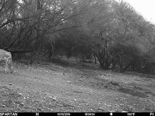 2019-01-15 18:06:34 - Crystal Creek 3 | by Crystal Creek Bowhunting