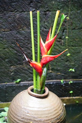 A Balinese bird of paradise in a vase