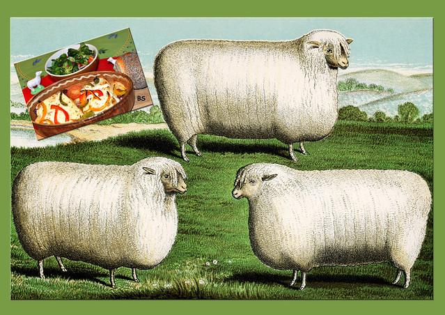 März 2019: Überbackener Schafskäse mit Paprikaschoten, Zwiebel, Knoblauch, Tomaten, Oliven ... Backofengericht ... Walzenförmige Schafe ...Foto: Brigitte Stolle