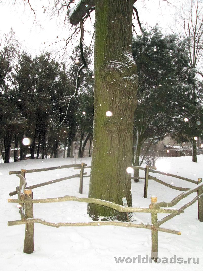 Ботанический сад Ростов