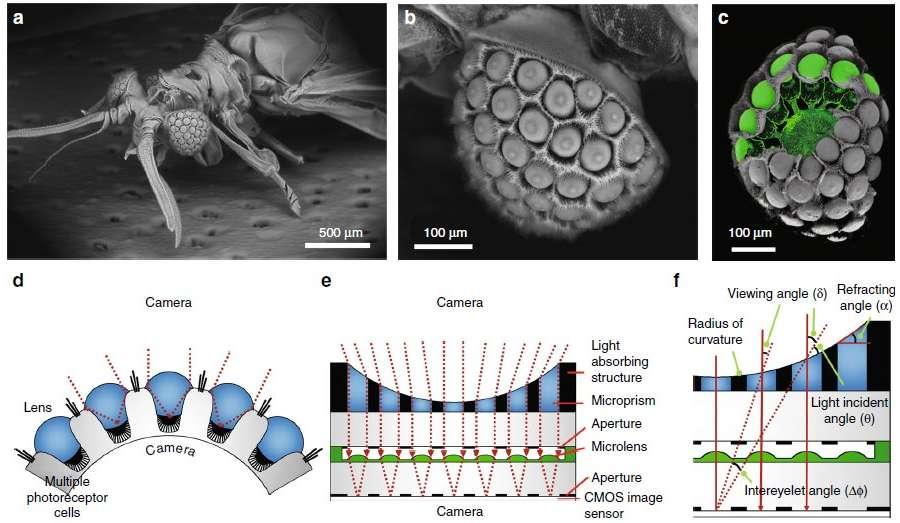 appareil-photo-bio-inspiré-parasite