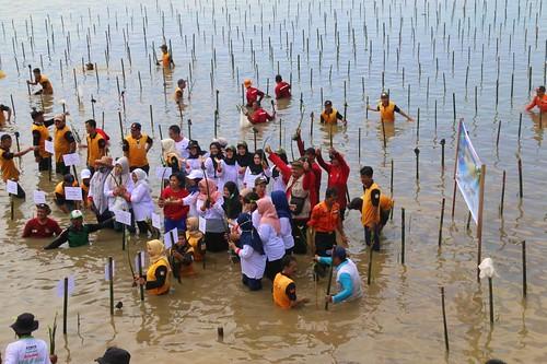 Srikandi BKSDA Kalsel Dukung Perempuan Peduli Mangrove (03)