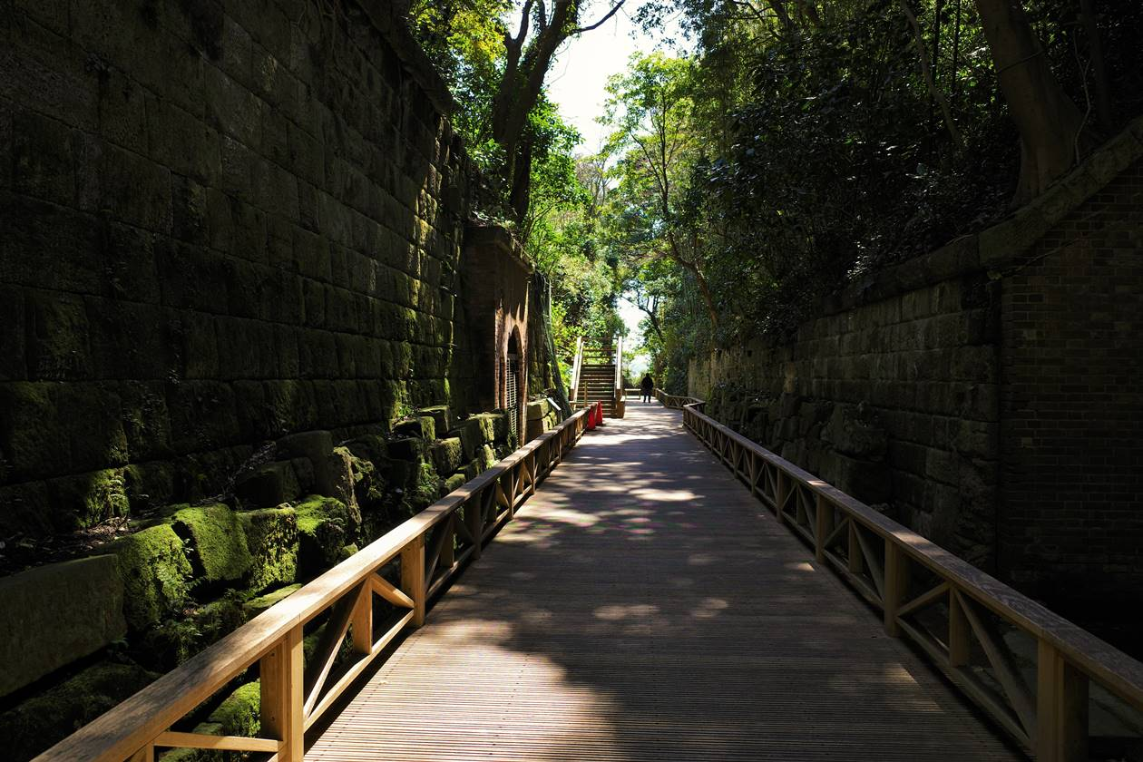 猿島の木道路
