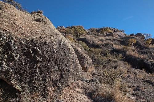 Tillansdia xiphoides on the rock.